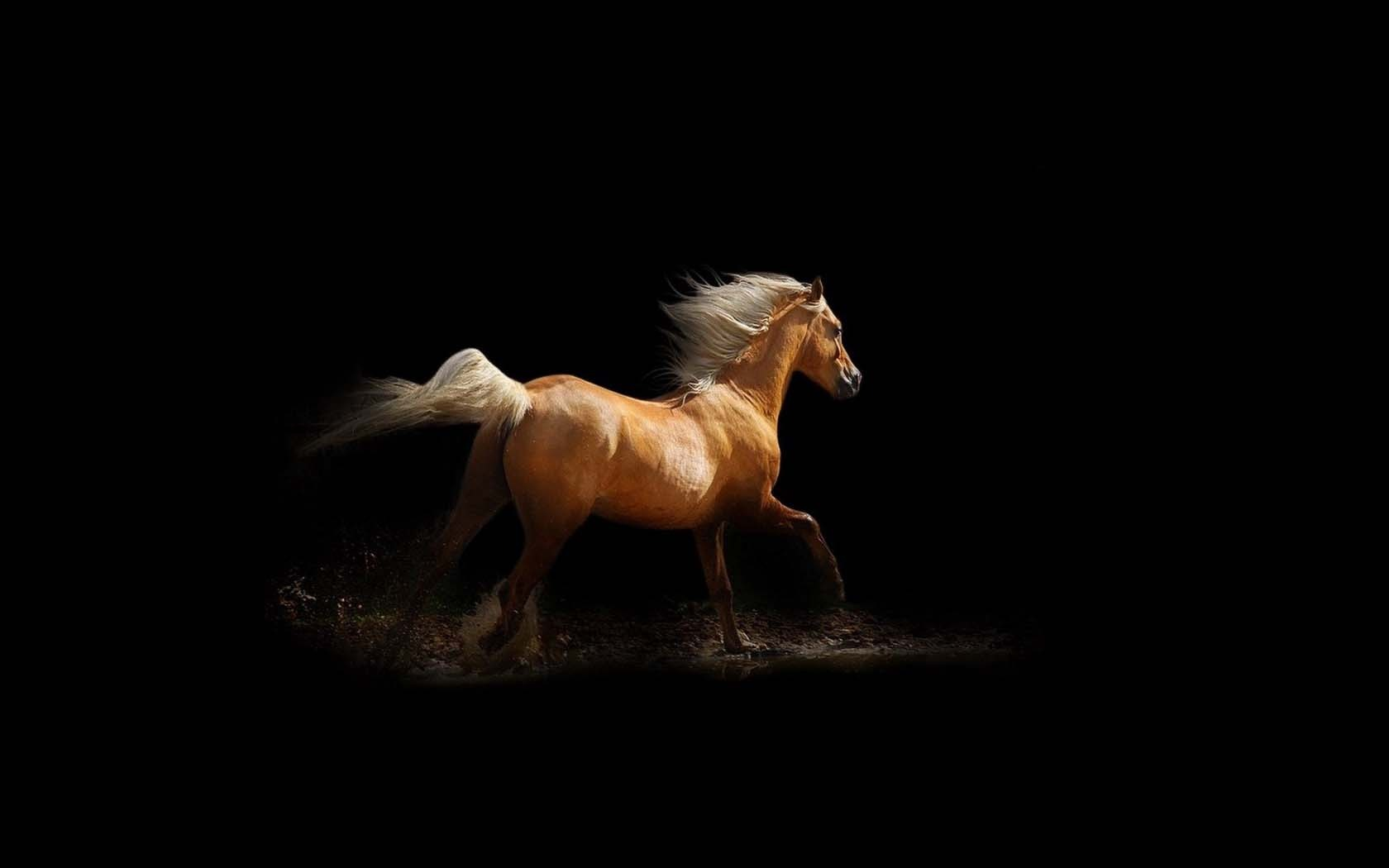 Обои на рабочий стол темная лошадь