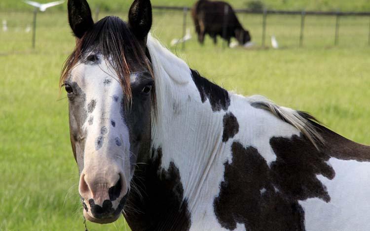 Животные лошади обои рабочий стол