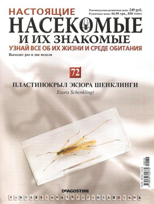 Насекомые №72 Пластинокрыл Экзора Шенклинги (Exora schenklingi)