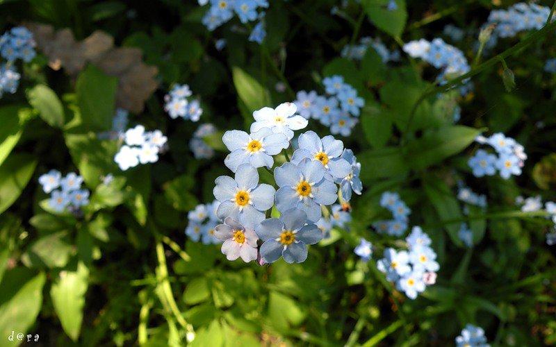 Карт флора цветы голубые и синие