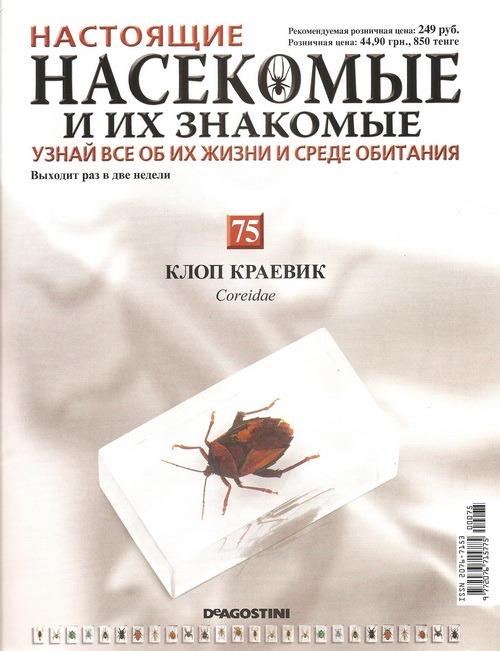 Насекомые №75 Клоп-краевик (Coreidae)