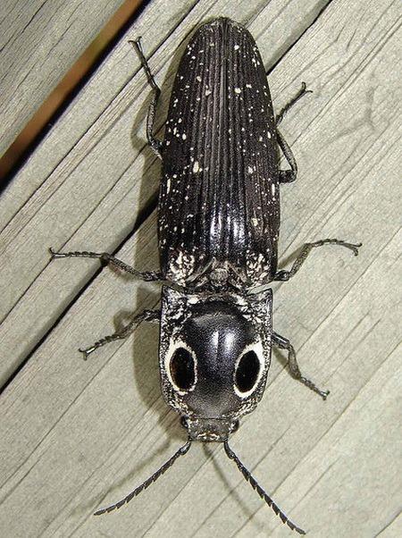 насекомые и их знакомые график выхода 2010 журнал