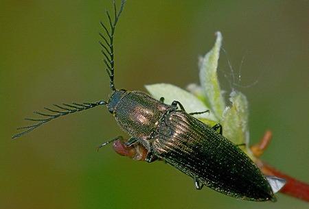 насекомые и их знакомые в картинках
