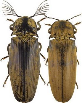 когда выйдет спецвыпуск насекомые и их знакомые