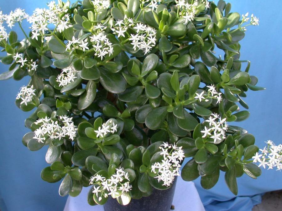 Показать комнатные цветы в картинках 7