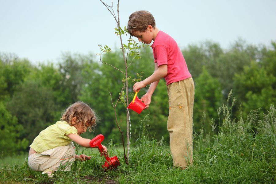 Дети сажают цветы картинки 2