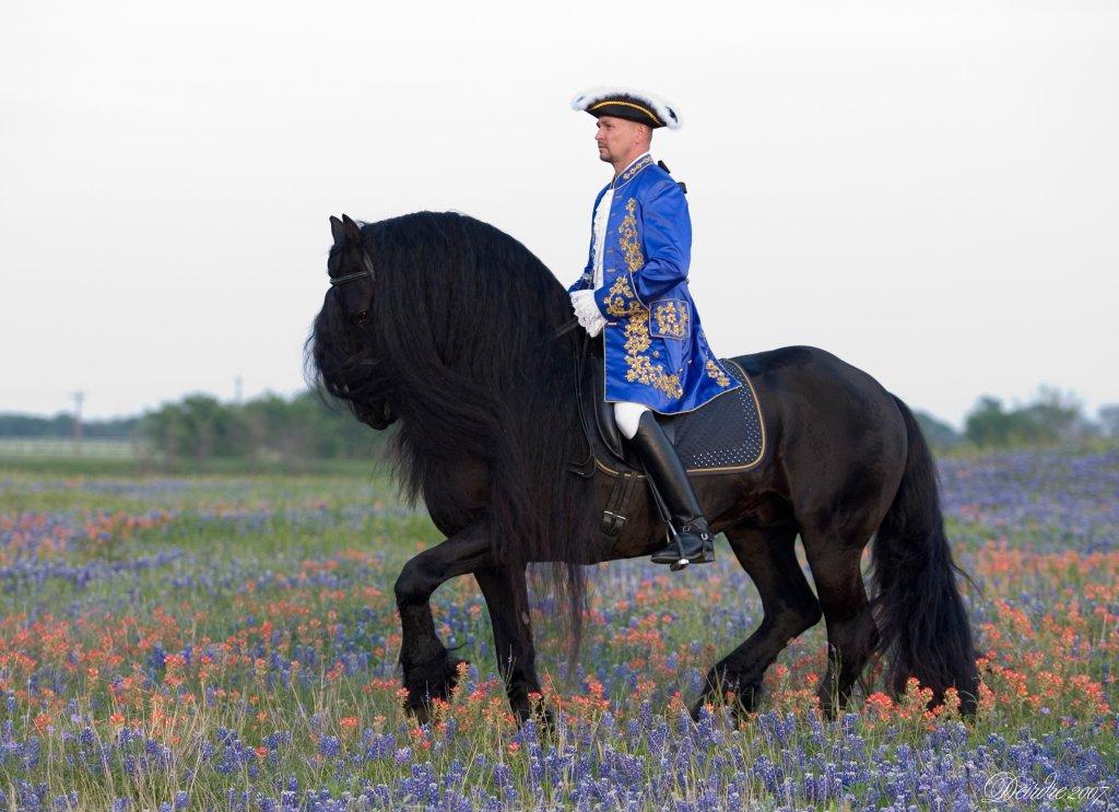 Фризская лошадь 1639593