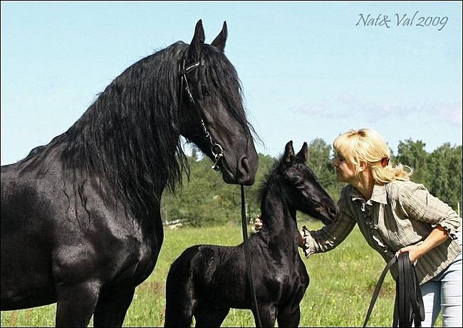 Фризская лошадь 1639602