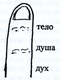 Фаланга пальца
