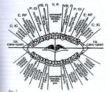 Проекция на зубах внутренних органов человека