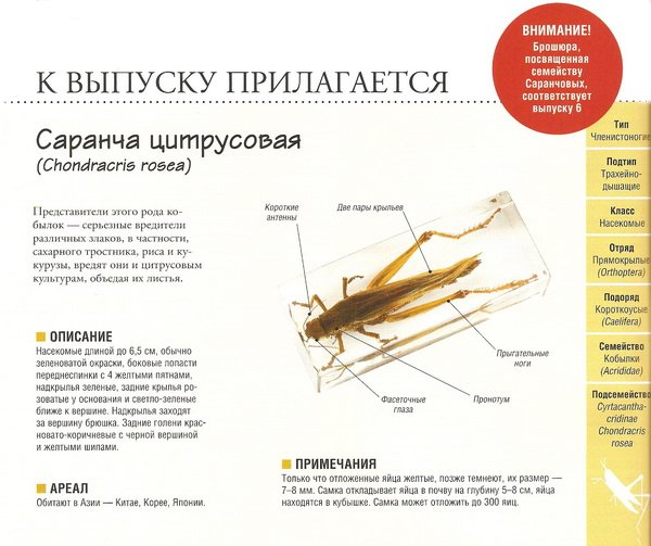 настоящие насекомые и их знакомые 2014 купить
