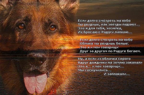 Cтихи Есенина о любви короткие  Оллам  Стихи