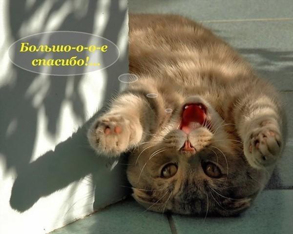 http://4put.ru/pictures/max/562/1729438.jpg