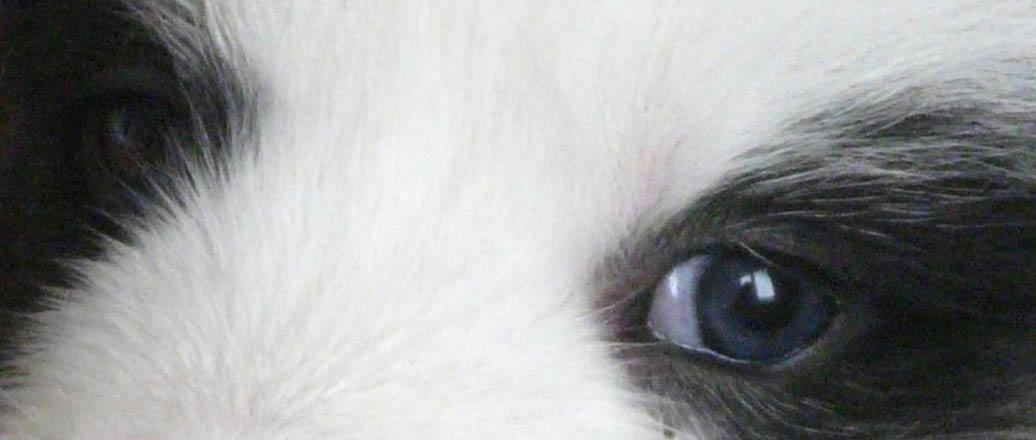 Цвет глаз - Страница 2 1731297