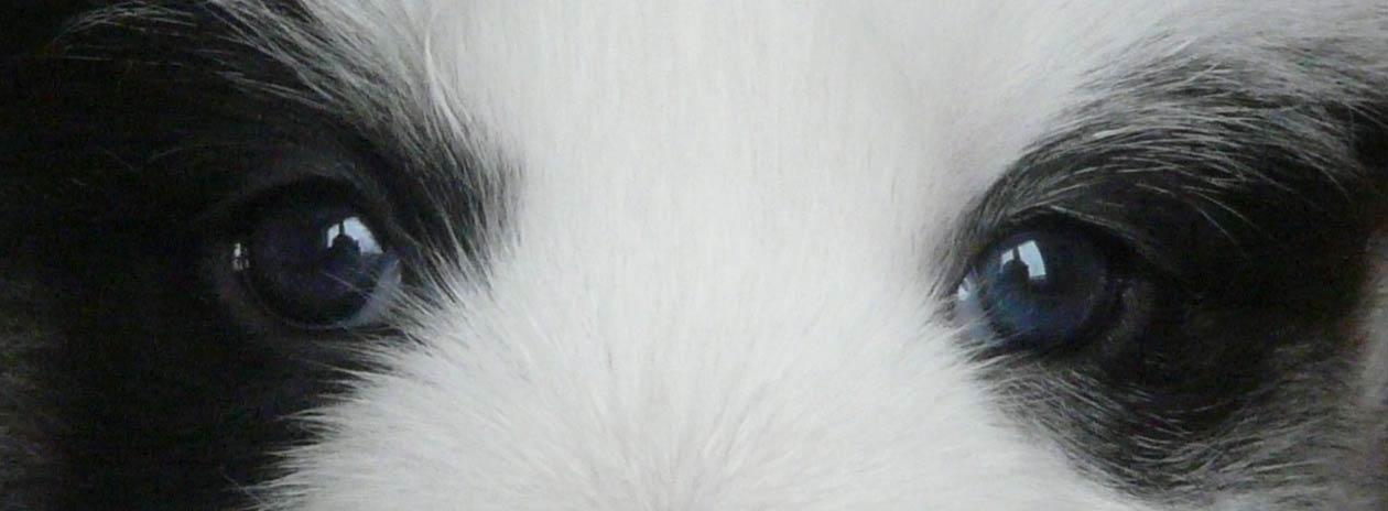 Цвет глаз - Страница 2 1731298