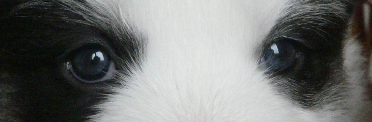Цвет глаз - Страница 2 1731299