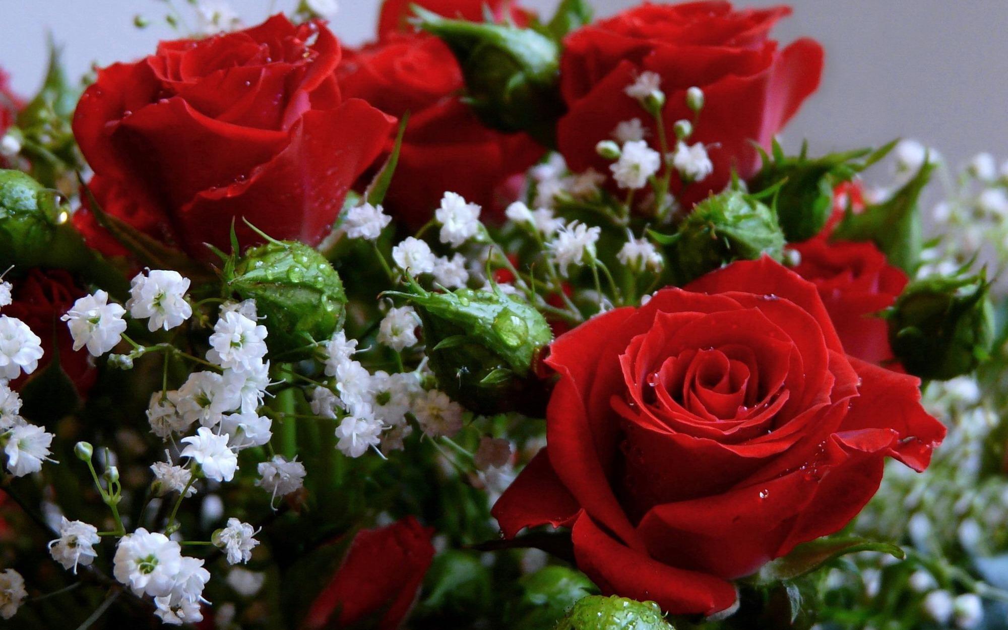 Стихи о розе розах  Что такое любовь