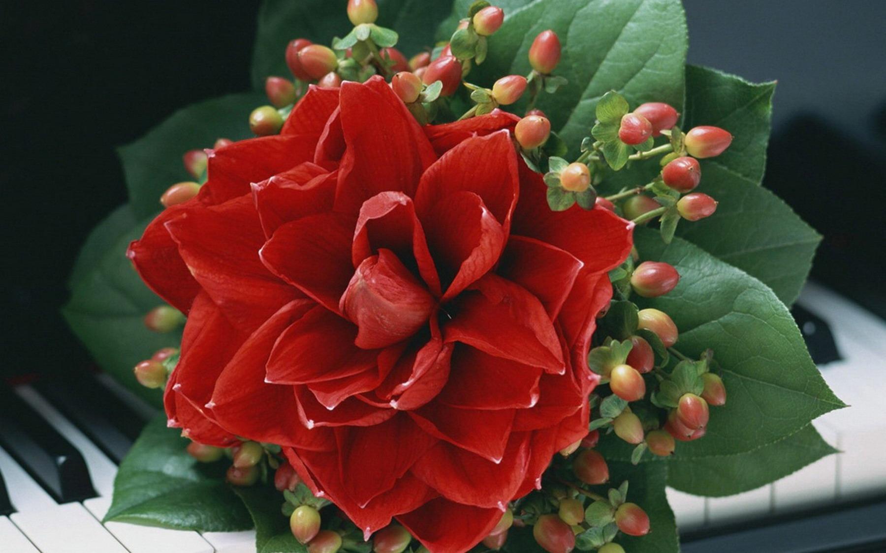Луковичные цветы и растения для сада фото названия