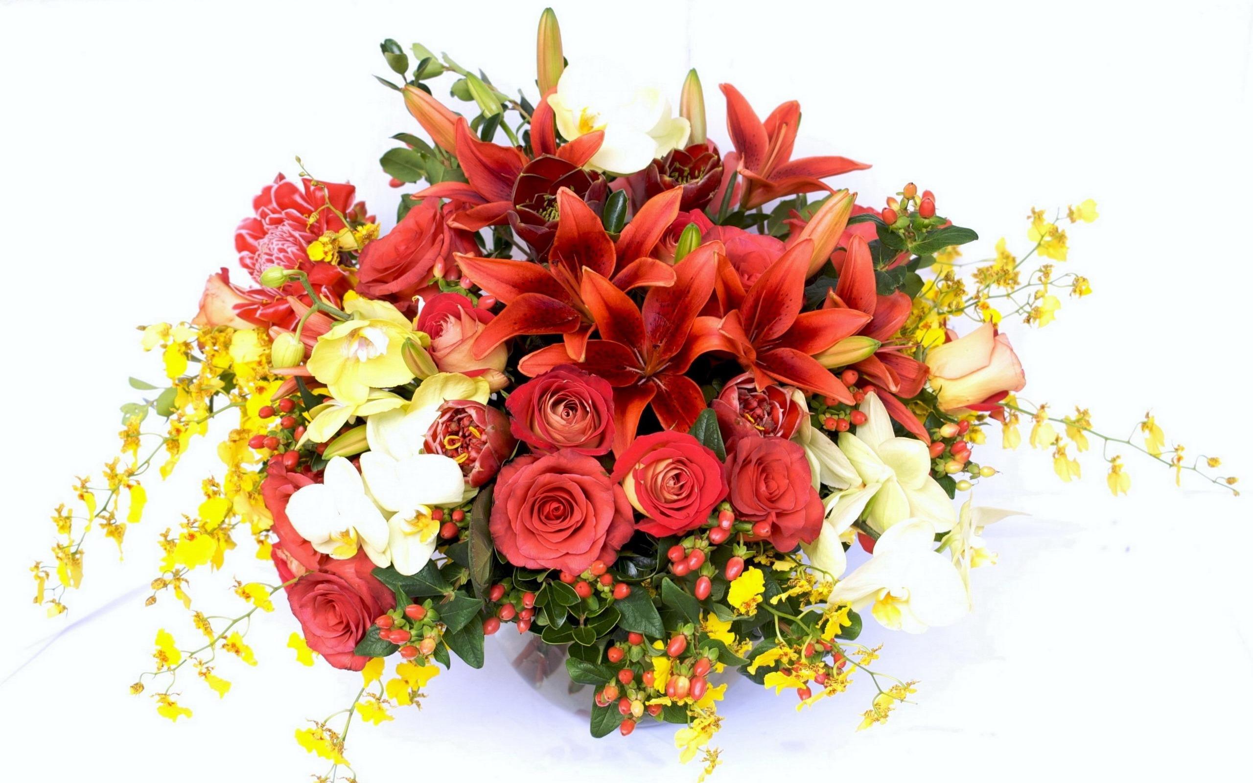 Цветы васильки  фото виды посадка и уход