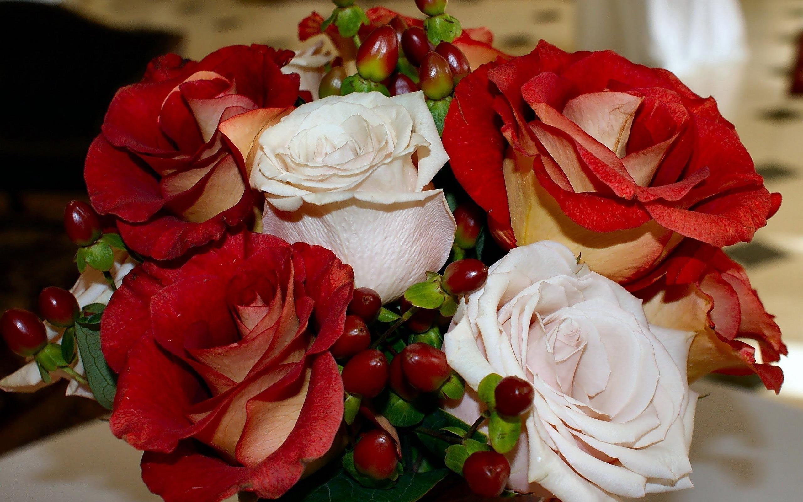 Голландские тюльпаны фантастическая красота 30 фото