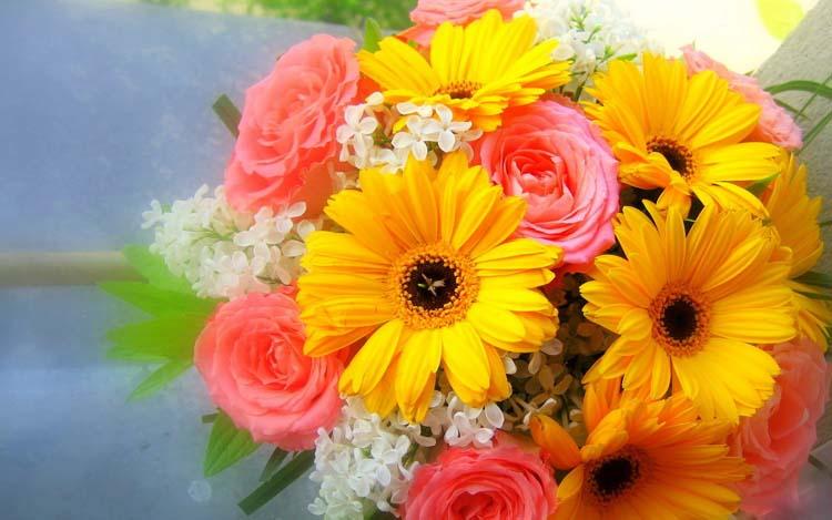 Васильки цветы фото  photosfloweryru