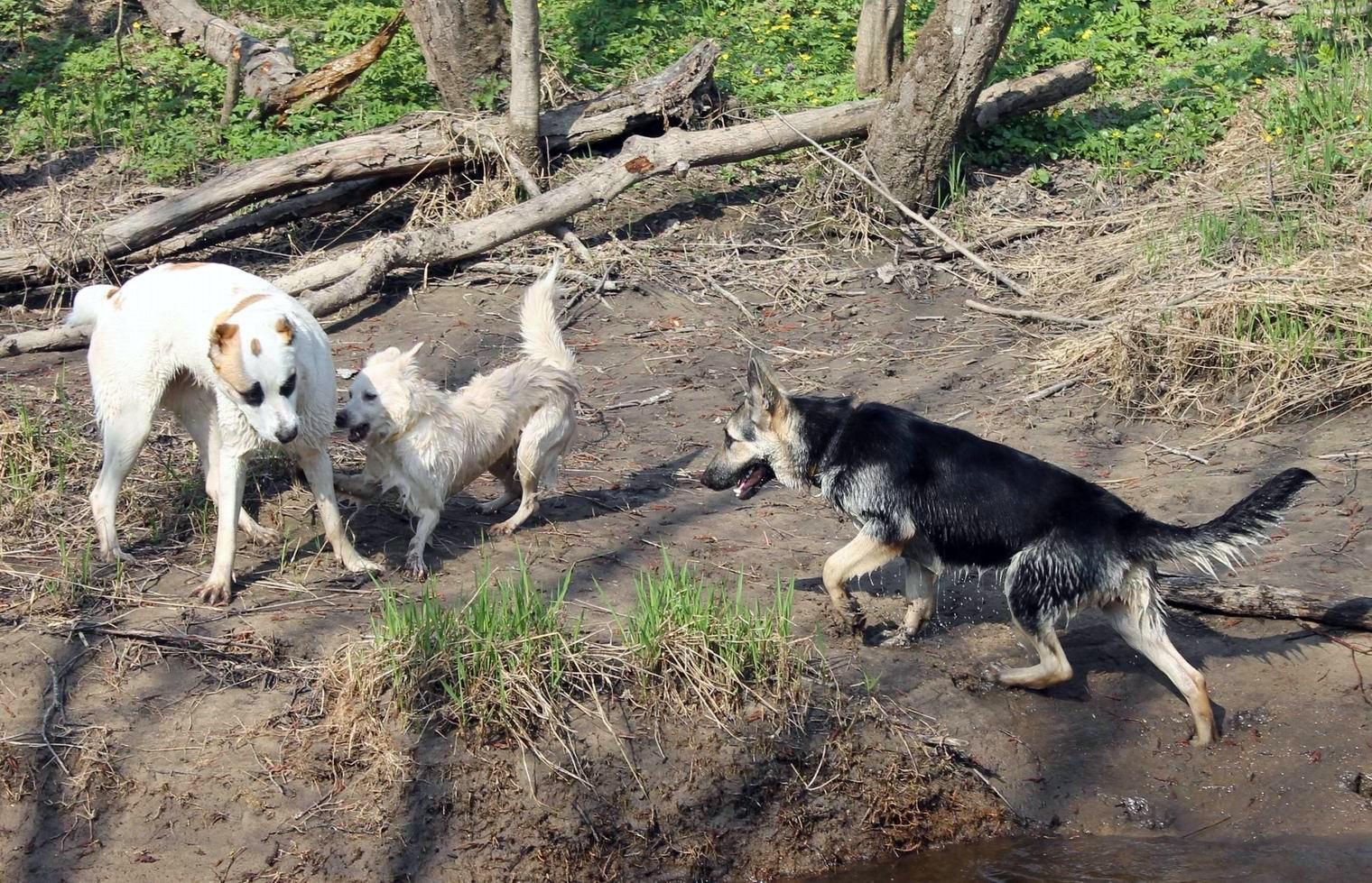 Мои собаки... и не только мои, и не только собаки =) 1884719