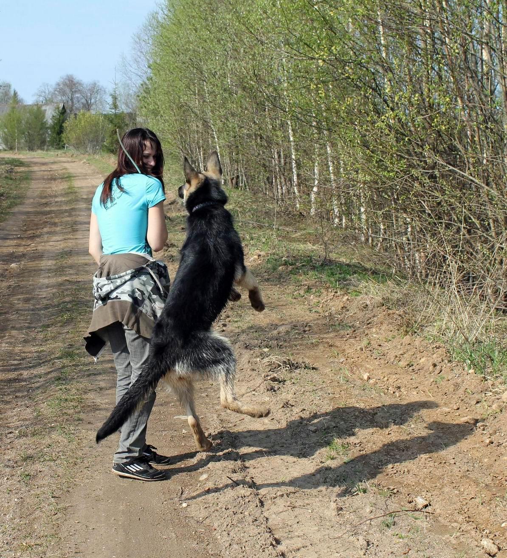 Мои собаки... и не только мои, и не только собаки =) 1884721