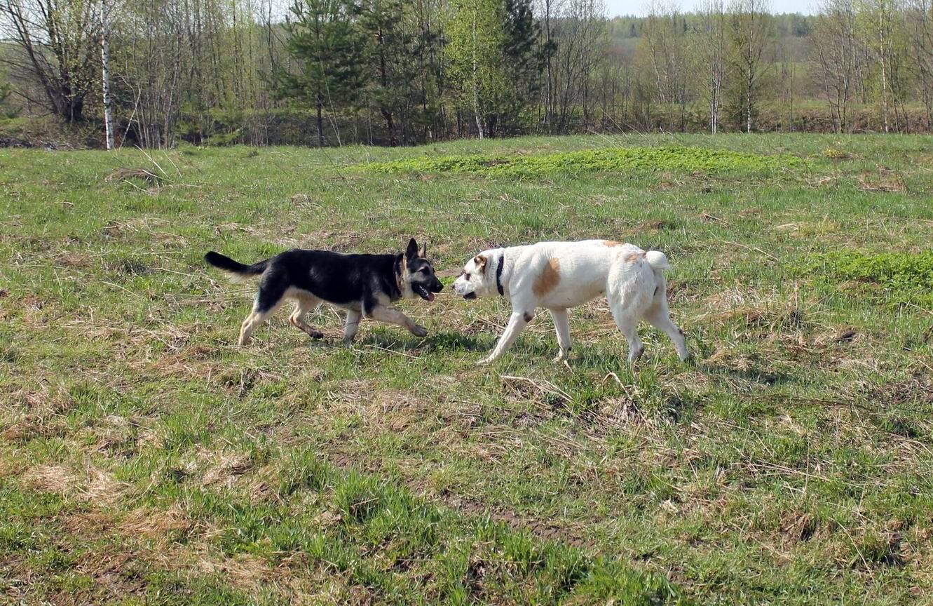 Мои собаки... и не только мои, и не только собаки =) 1884729