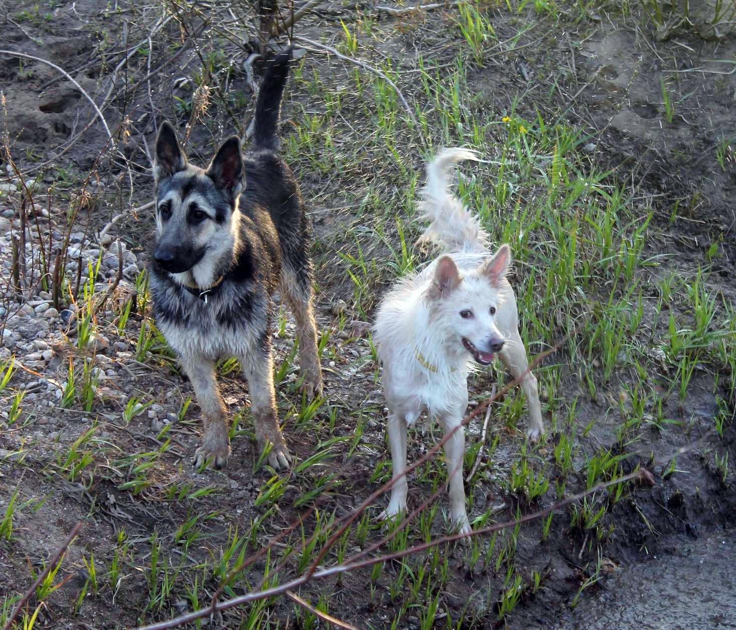 Мои собаки... и не только мои, и не только собаки =) 1884739