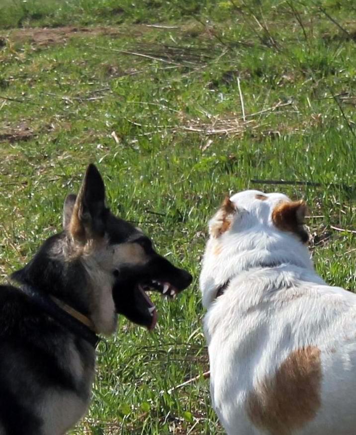 Мои собаки... и не только мои, и не только собаки =) 1884768