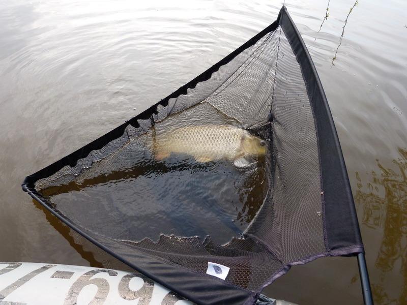 как ловить сазана сетями