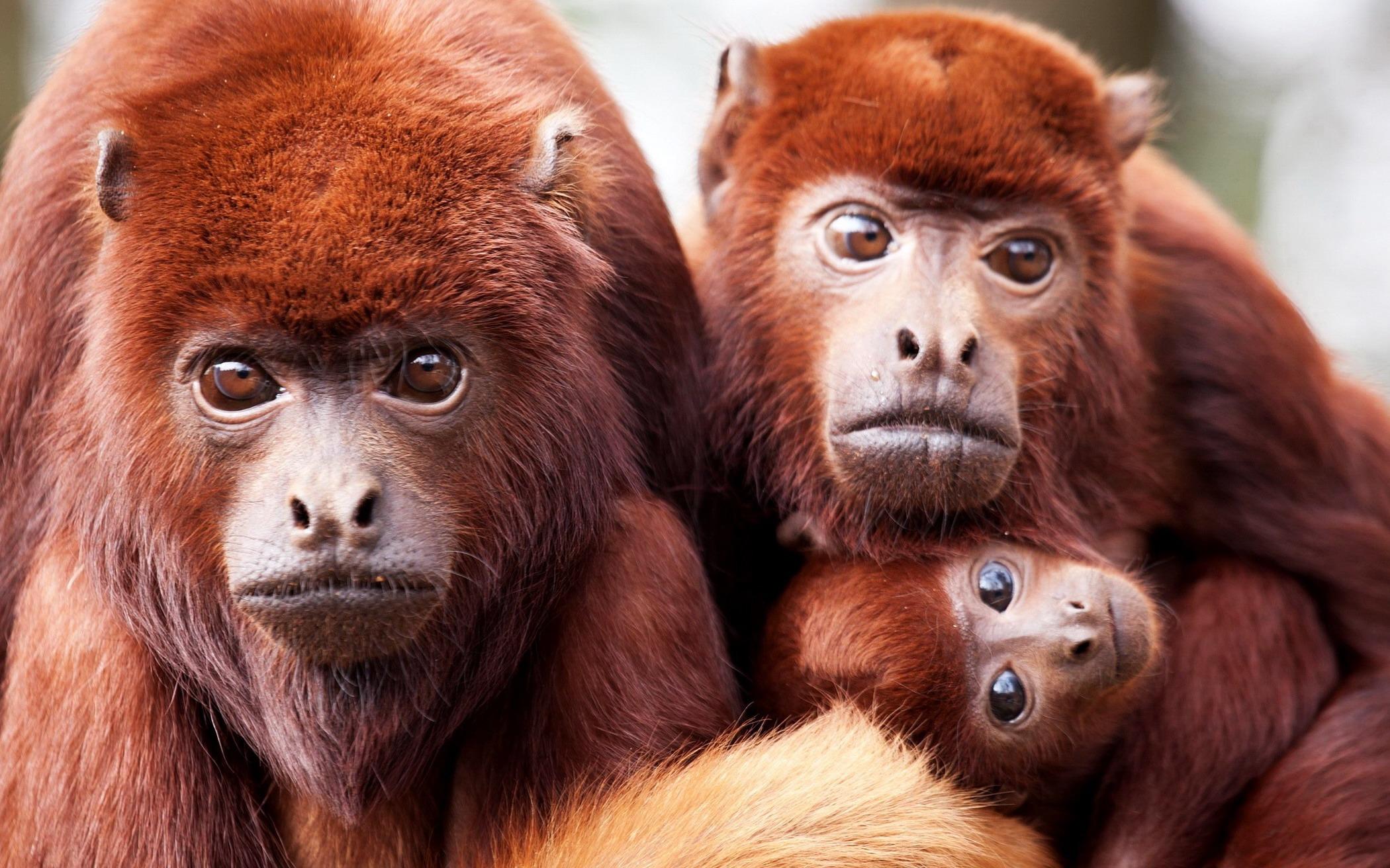 Животные и природа рассказы и фотографии животных