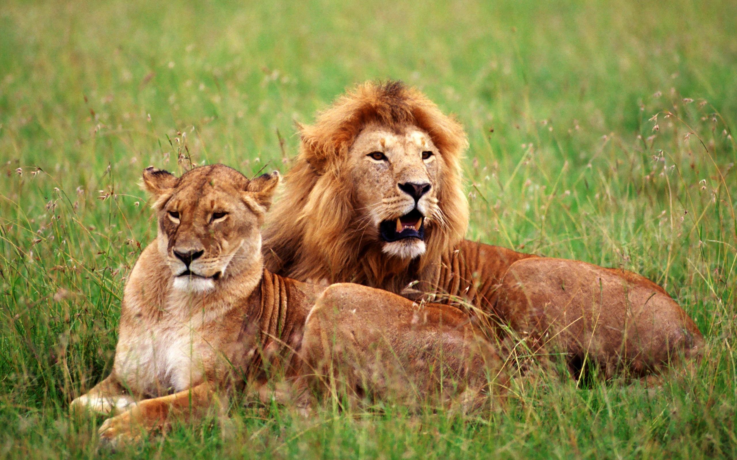 львов фото на рабочий стол