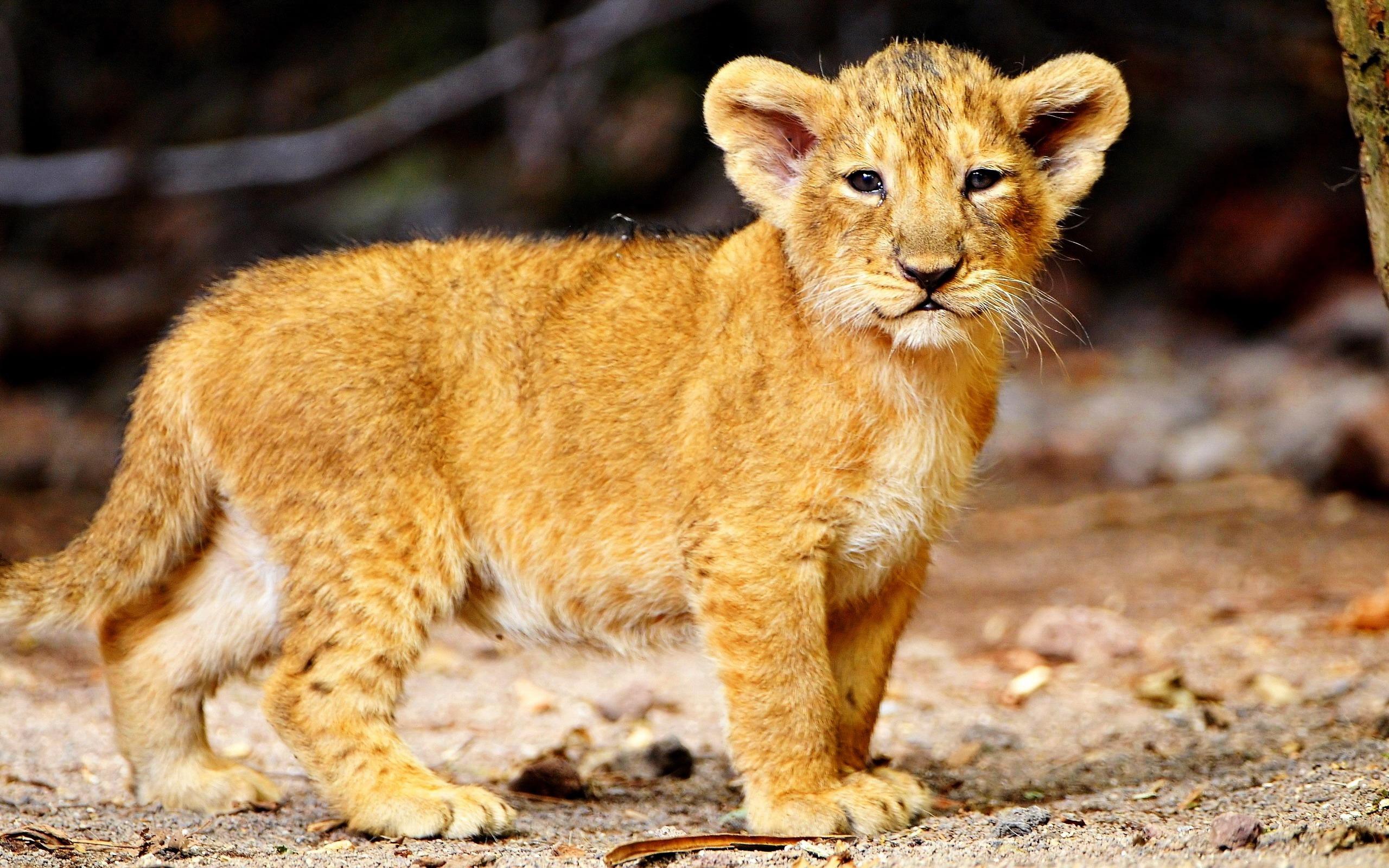 Картинки фото красивые животные