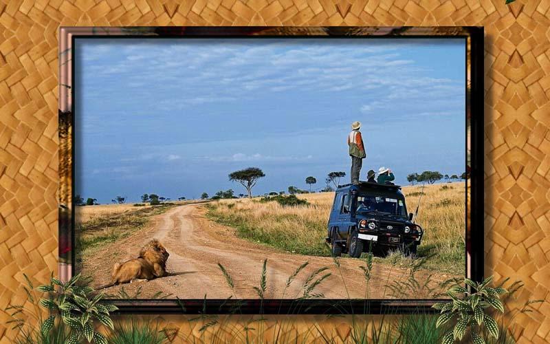 Животные Львы Фото Обои рабочий стол