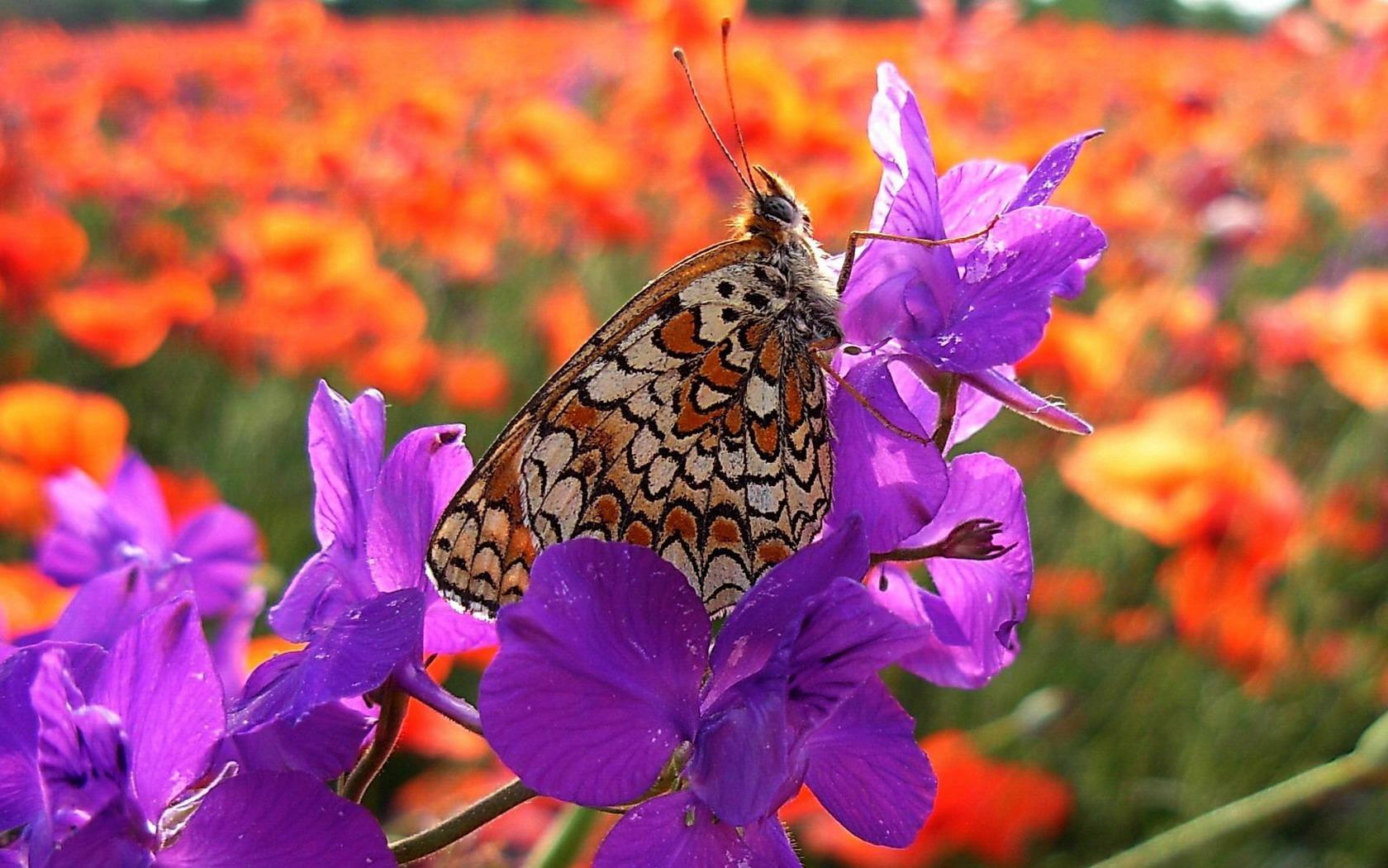 Насекомые бабочки дата 13 06 2013