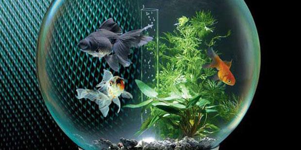 Аквариумные рыбки с чего начать