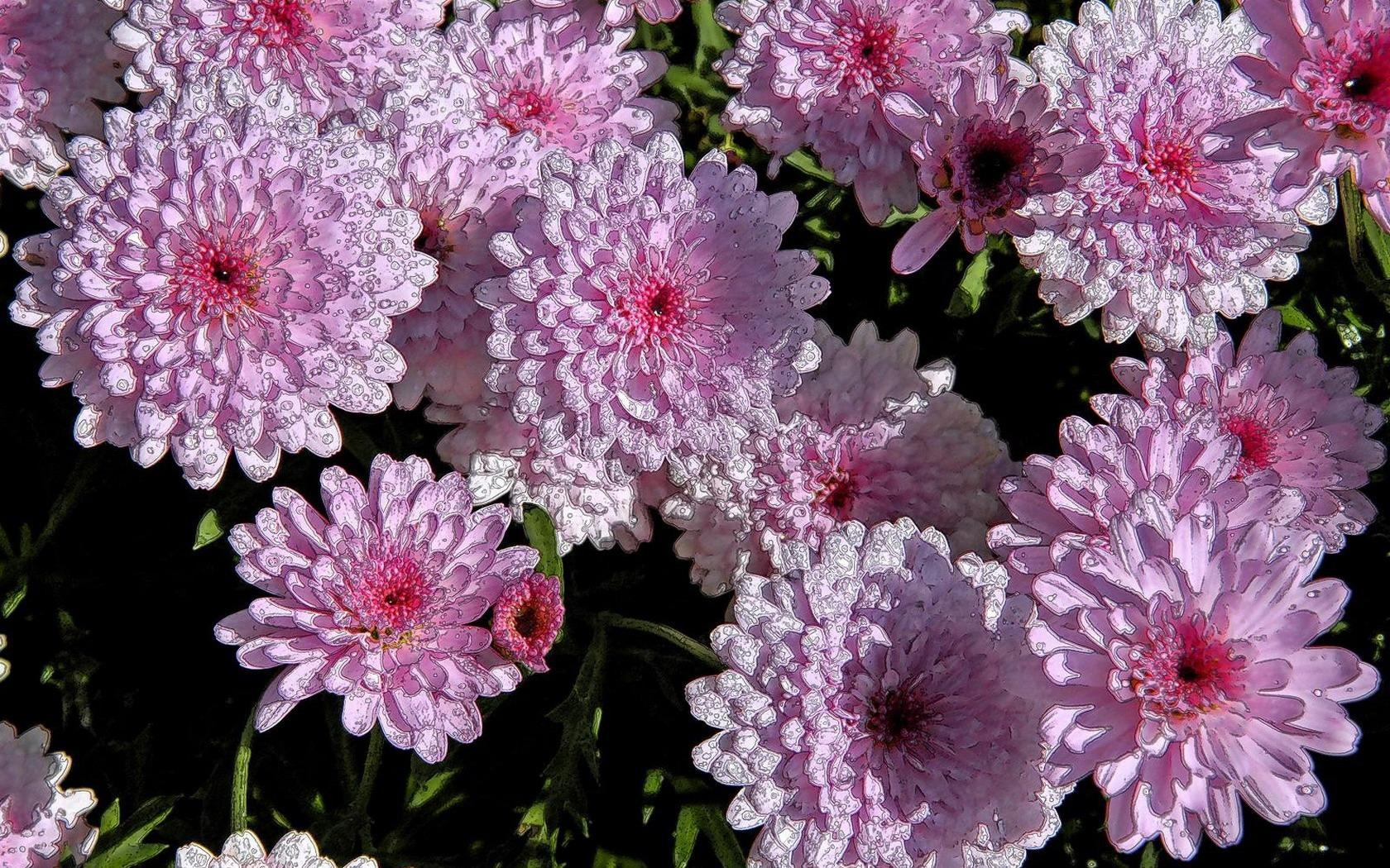 цветы букеты композиции обои для рабочего стола