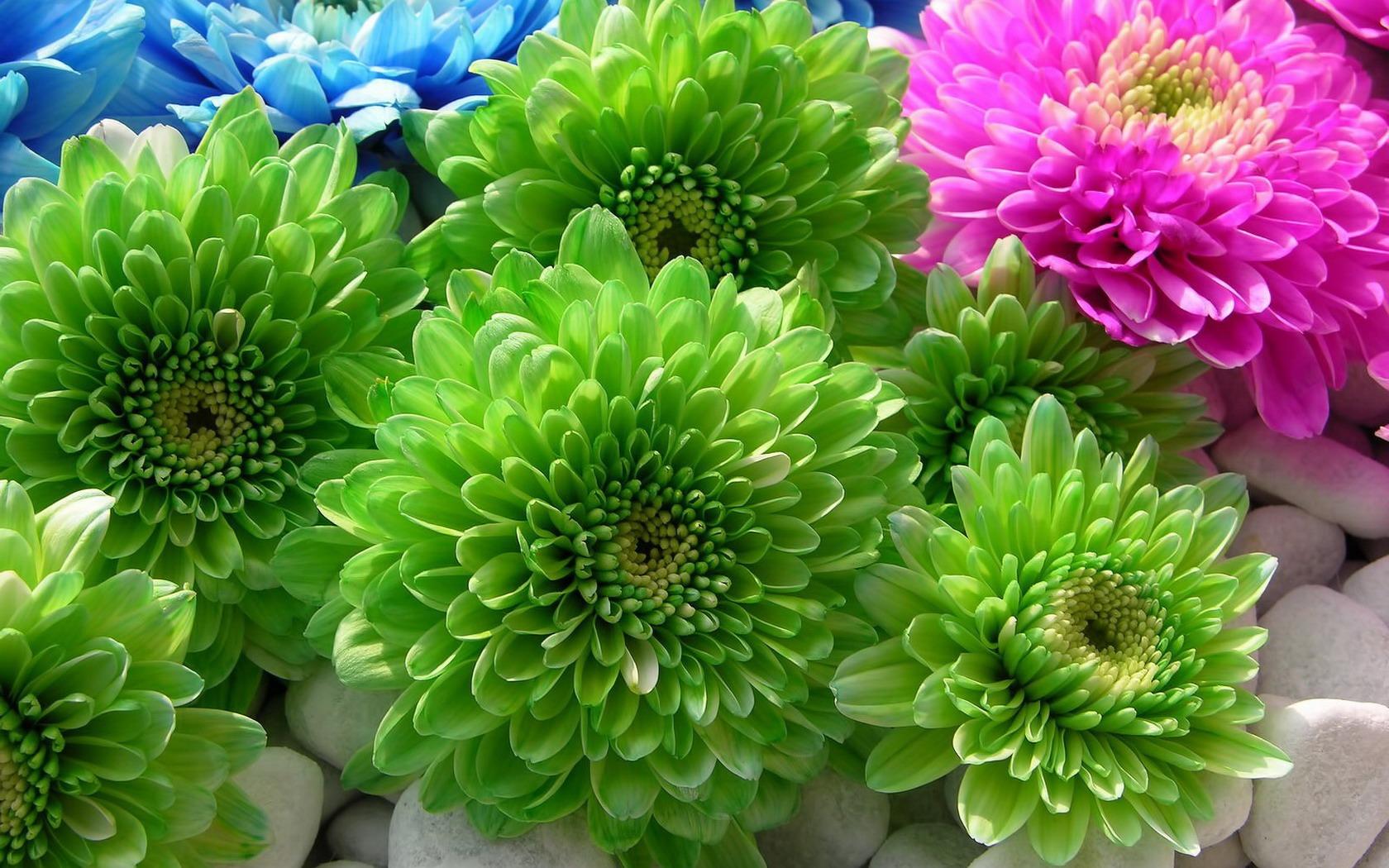 Доставка цветов в Тюмени   2400ru