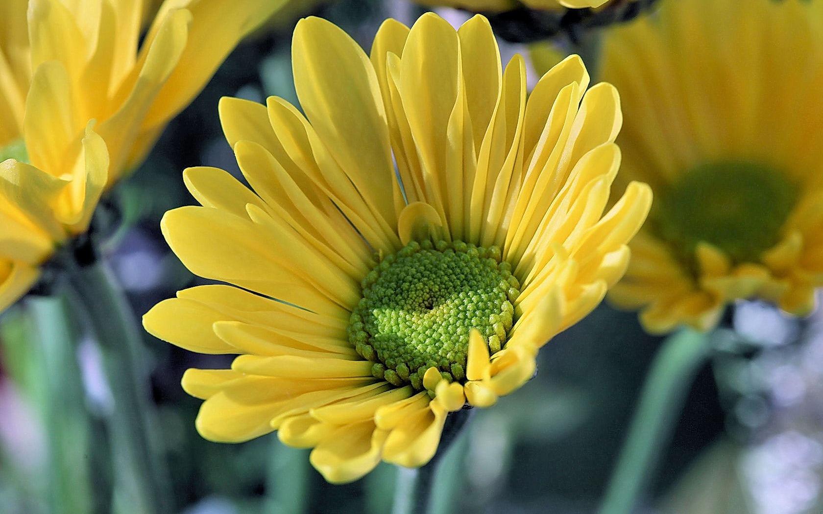 Фото желтые цветы в хорошем качестве
