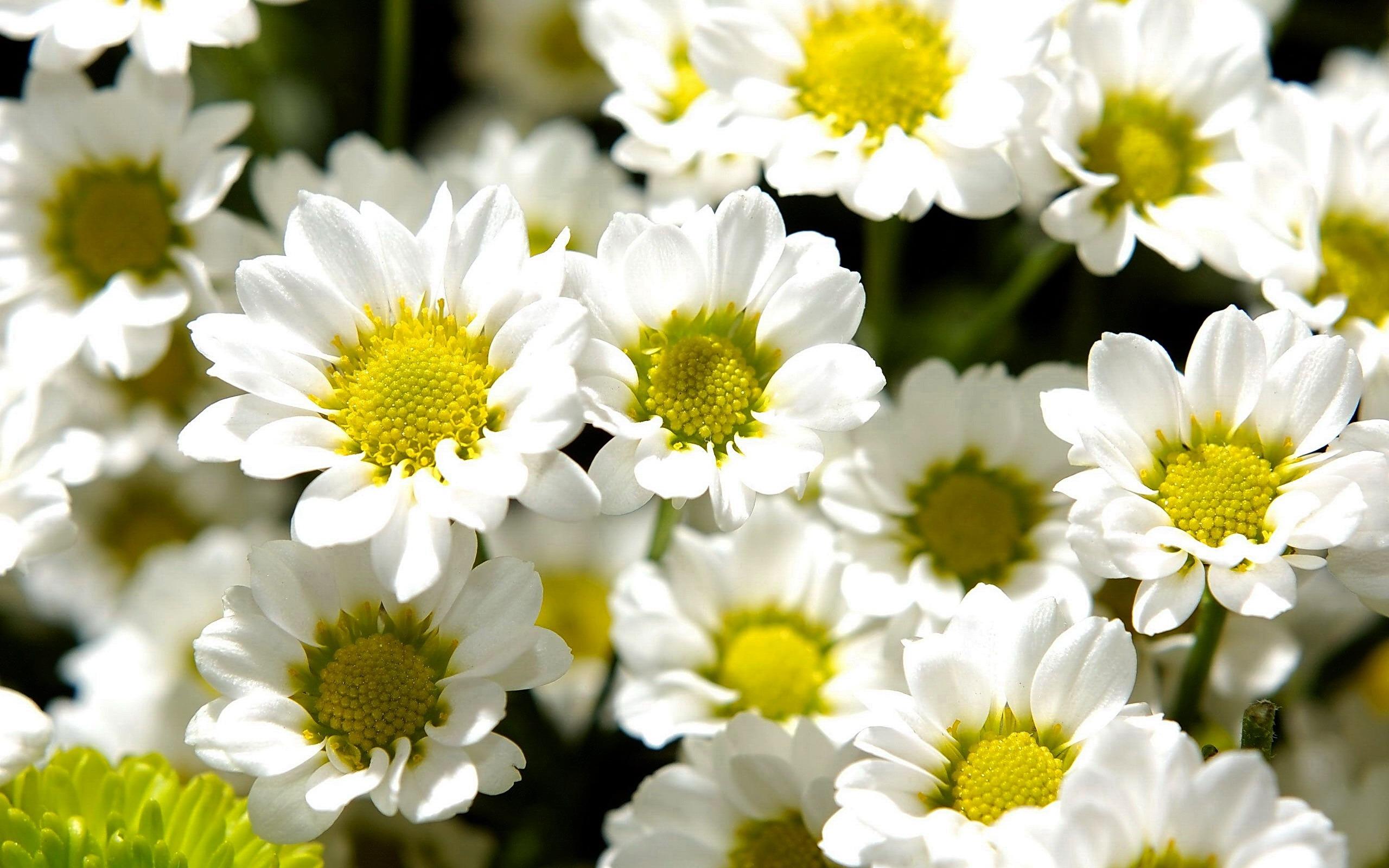 Цветы васильки фото букеты