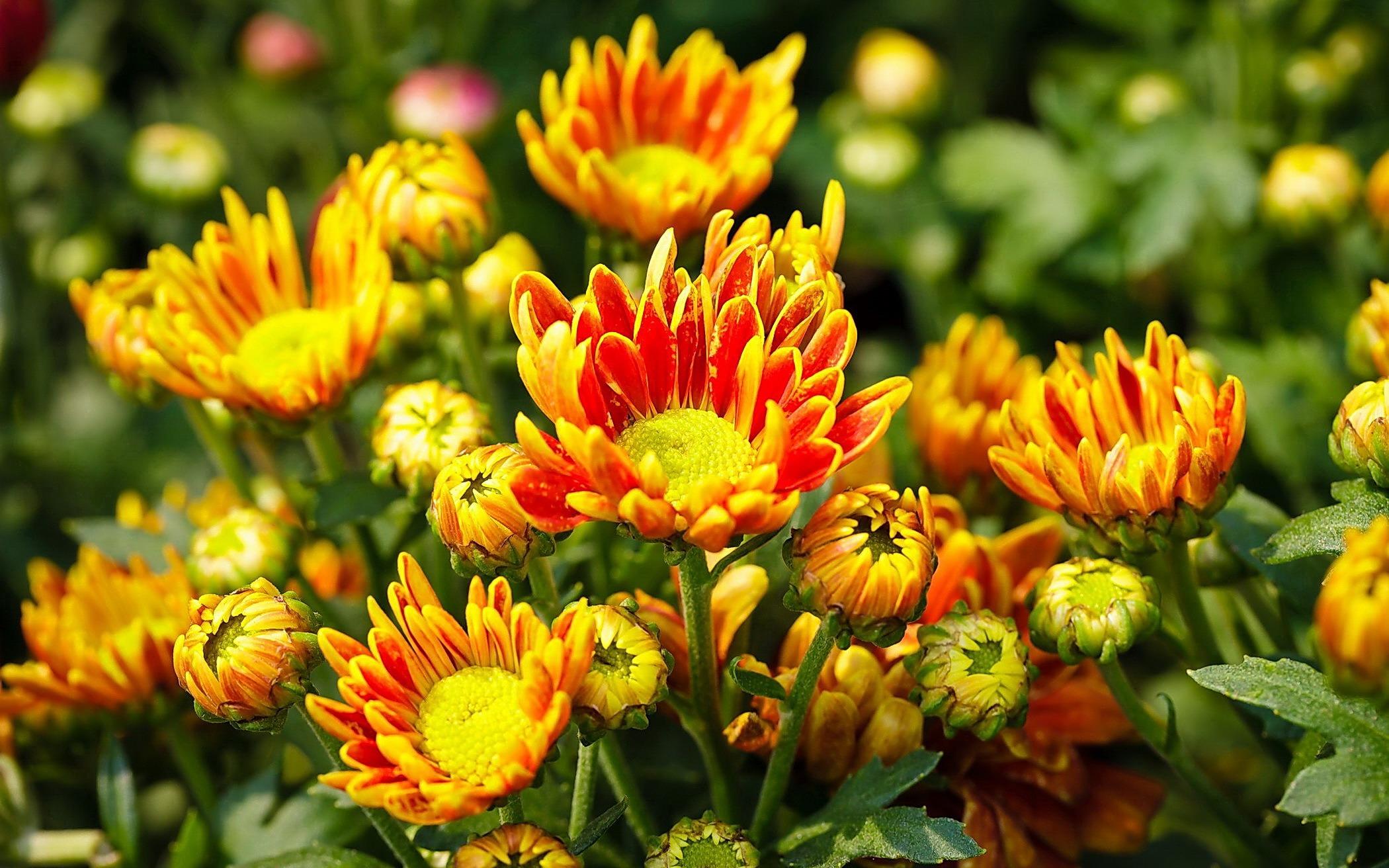 Комнатные растения  Сайт о растениях