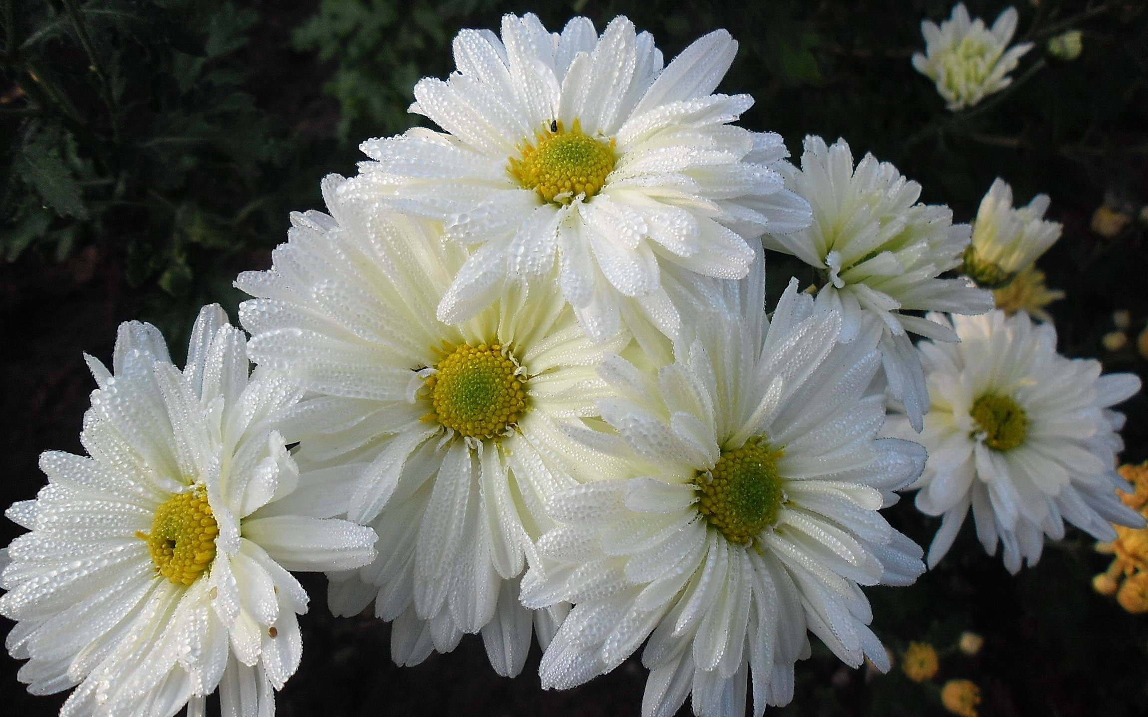 Как сделать большие цветы из лент Фото МК и видео уроки