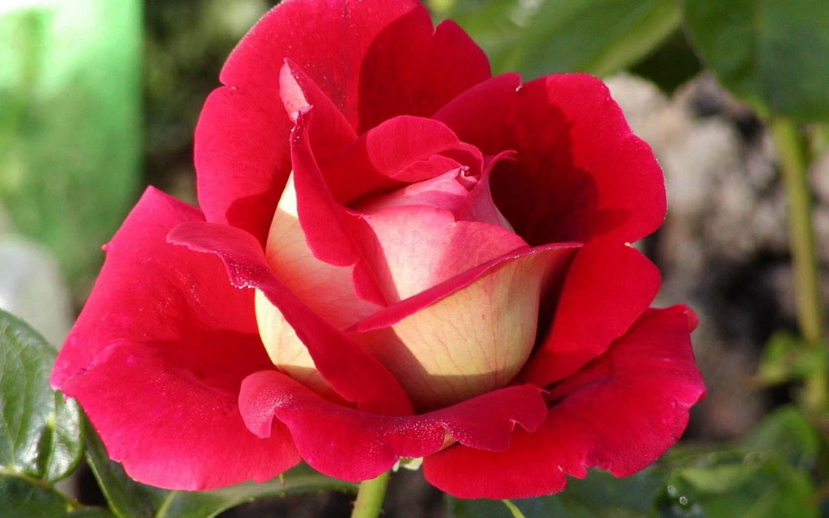 Купить цветы в Казани доставка букетов круглосуточно