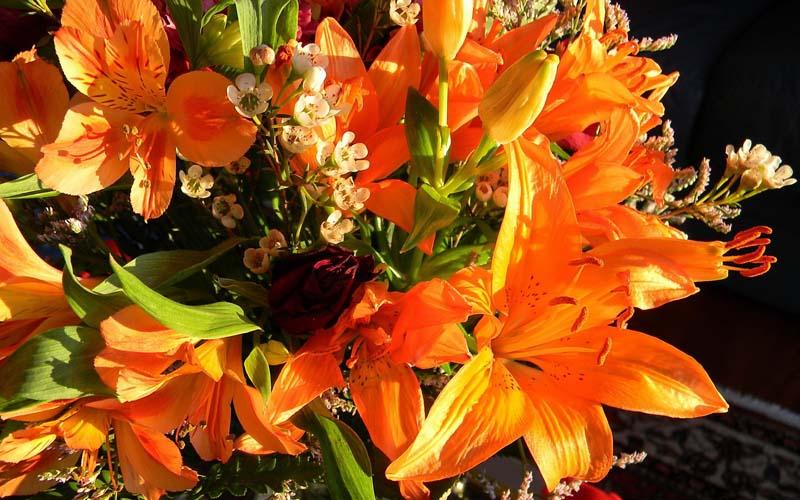 Цветы Альстрёмерия Перуанские лилии Обои рабочий стол