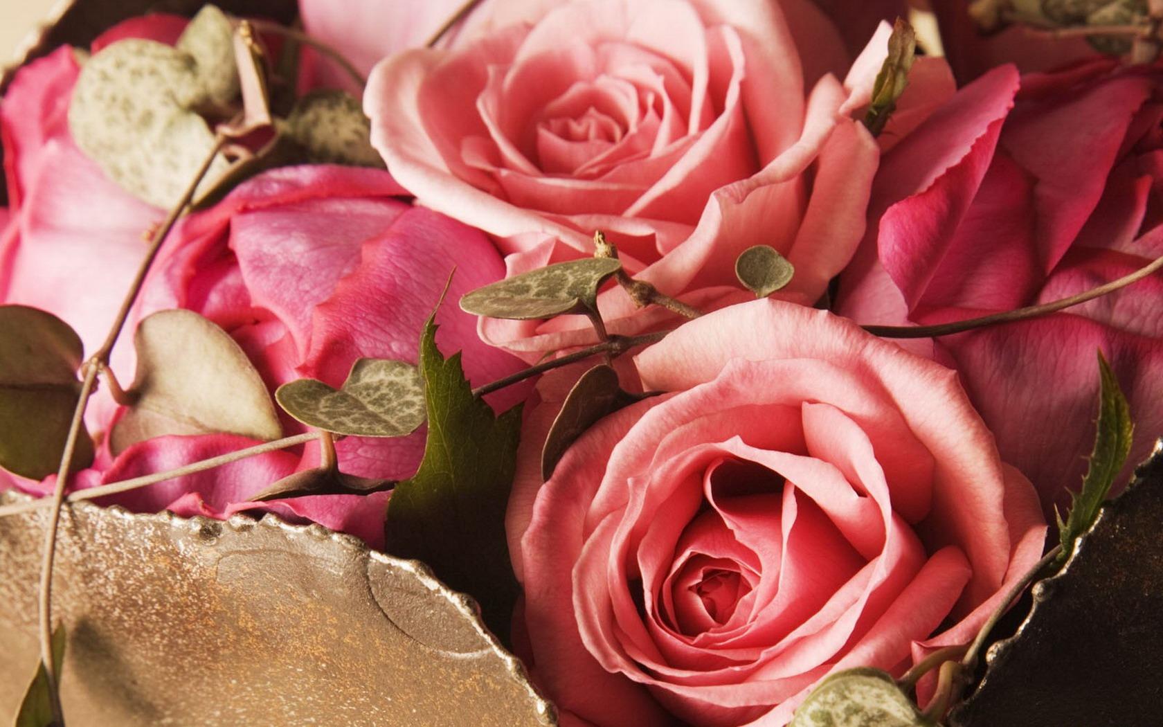 Комнатные цветы герберы уход размножение и лечение в