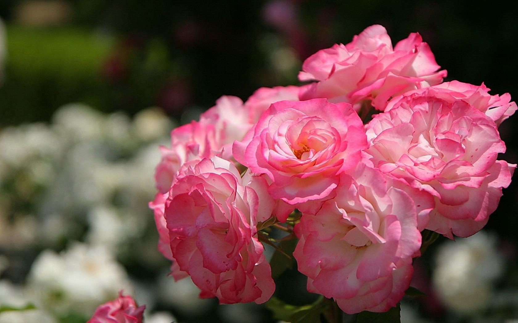 Фотографии цветы букеты