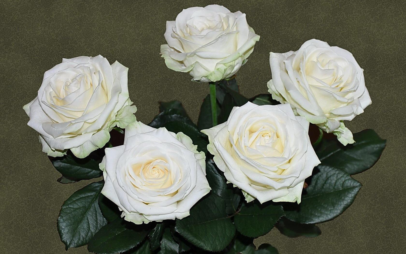 Живые цветы на могилу Какие растения посадить
