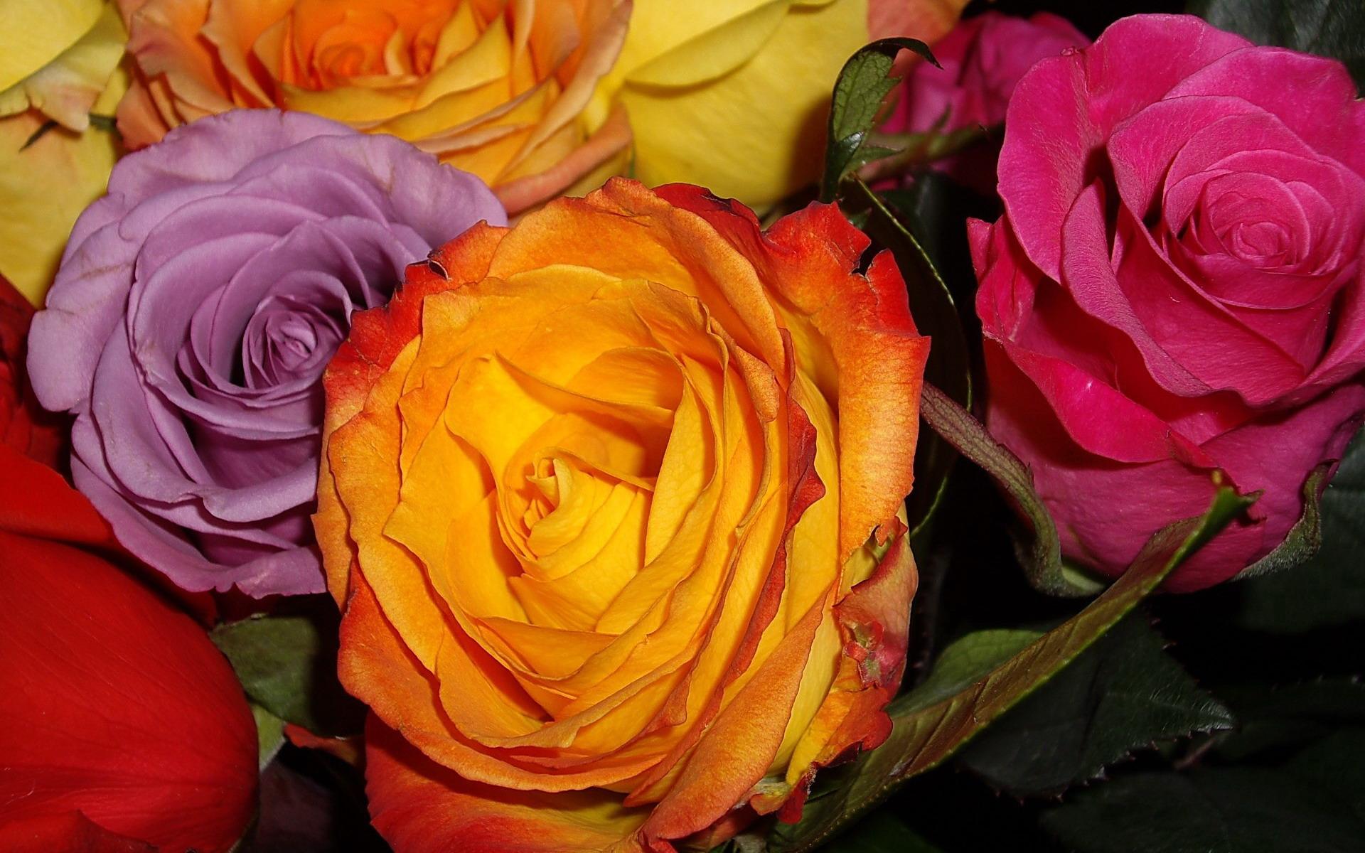 Цветы розы спиралью