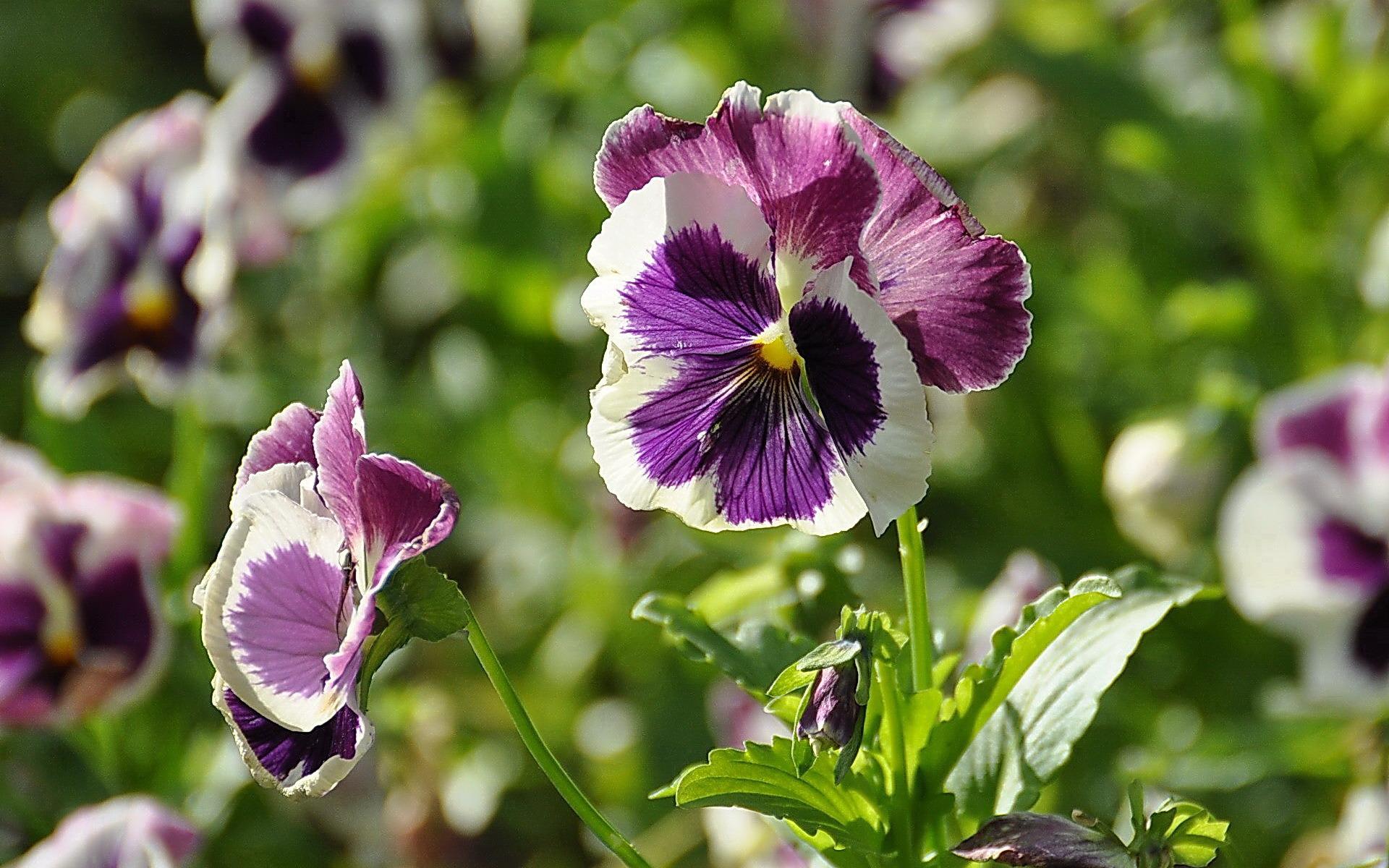 Цветы картинки 16k фото скачать обои2